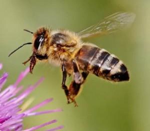 Bee Removal Orlando FL