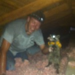 Emergency Animal Removal From Attic