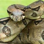 Snake Signs Orlando, FL