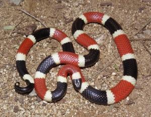 Snake Removal Orlando FL