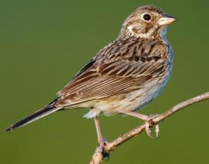 Sparrow Removal Orlando FL