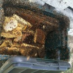 Bee-hive-removed