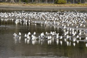 Seagull Control Orlando FL