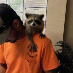 Animal Removal Orlando