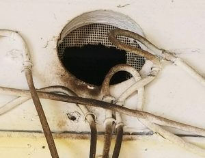 Orlando FL Rat Damage