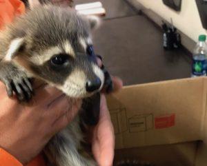 Humane Animal Removal Orlando