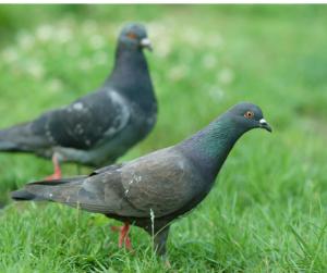 Bird Pests Orlando