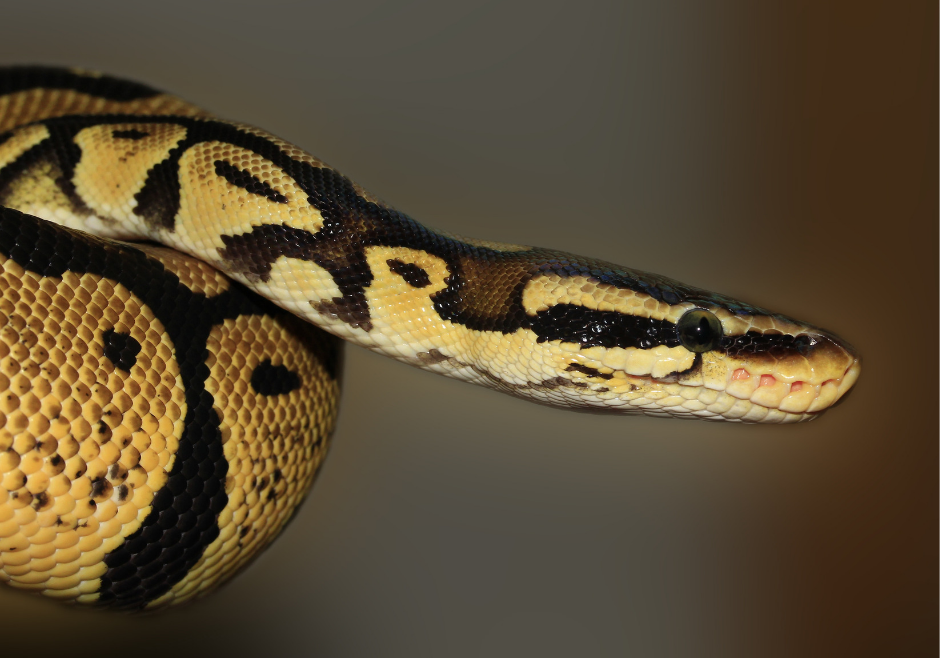 close up photo of snake