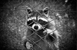Wildlife Removal Orlando