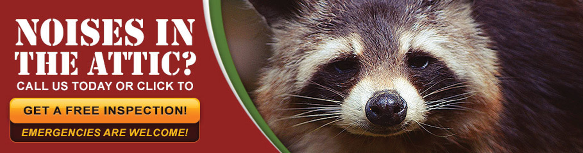 Orlando Animal Wildlife Removal and Critter Control