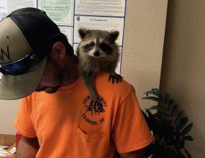 Raccoon Removal Ocala