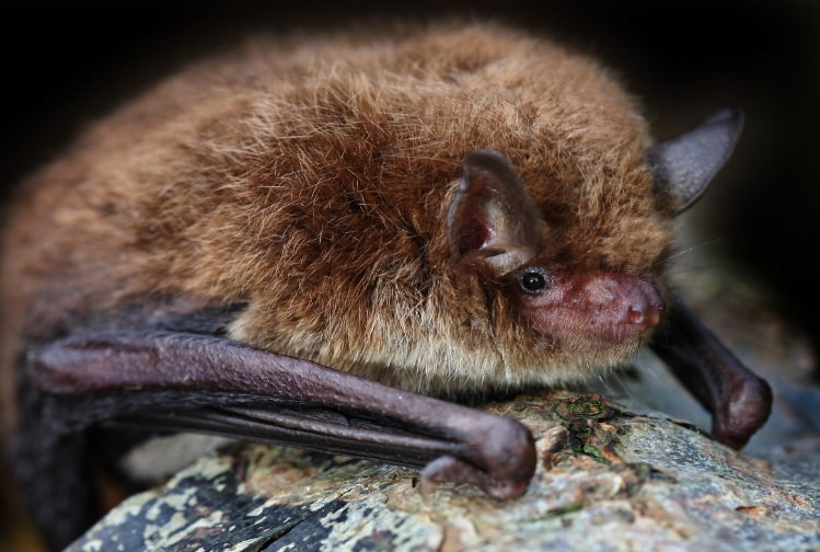 Bat Removal Polk County