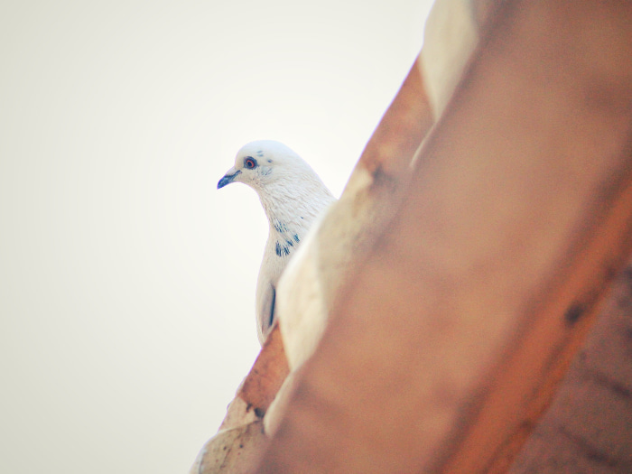 Bird Removal Orlando