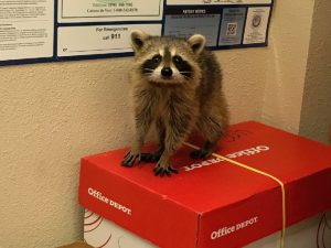Licensed Critter Removal Orlando