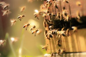 Bee Pest Services Orlando