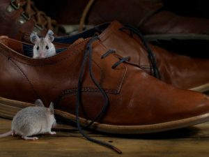 Orlando Mouse Removal Cost