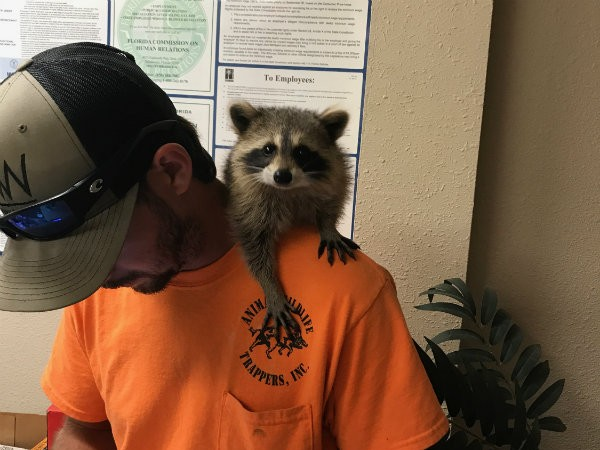Raccoon Removal Kissimmee