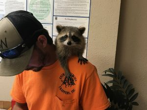 Local Wildlife Removal Company