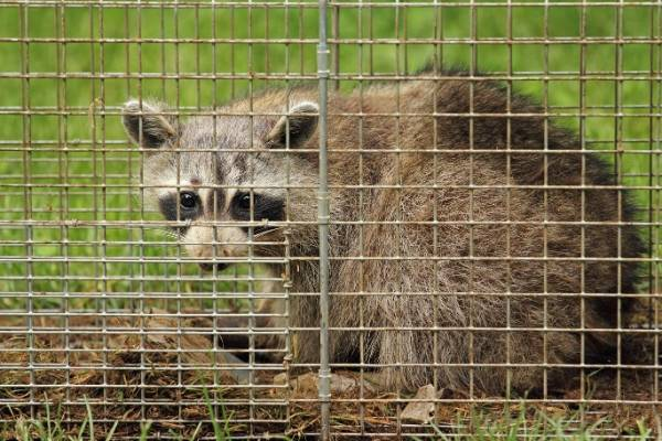 How Much Does Animal Removal Cost Orlando