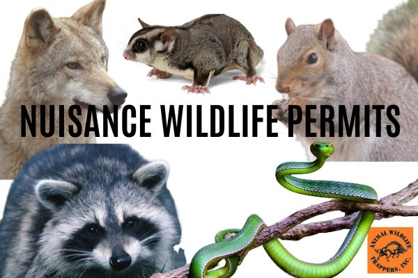 Nuisance Wildlife Permits