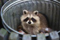 Animal Removal Services Near Me Orlando