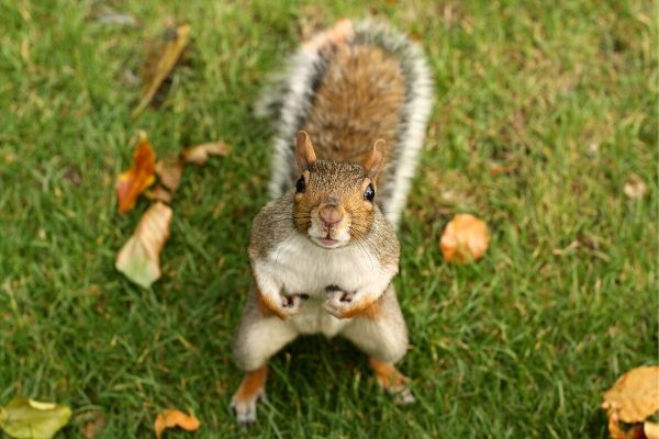Squirrel Removal Service Orlando