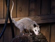 How To Protect Your Home From Wild Animals While You Are Away