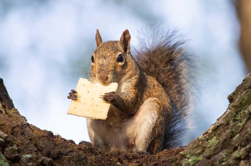 Wildwood Animal Removal