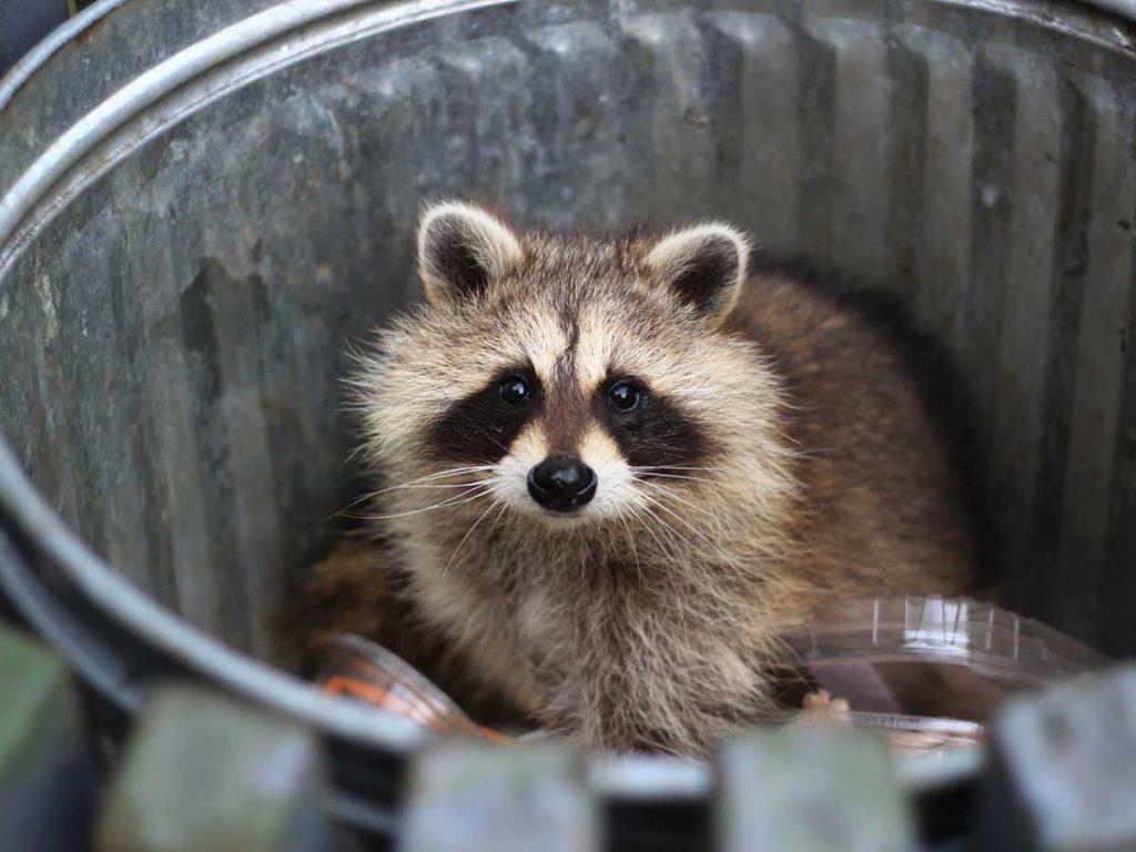 Wauchula Animal Removal