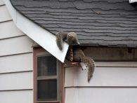 Critter Prevention Methods for Homes